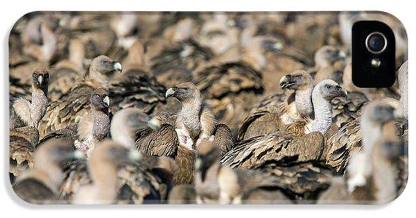 Griffon Vultures IPhone 5 Case