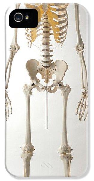 Human Skeleton IPhone 5 Case by Dorling Kindersley/uig