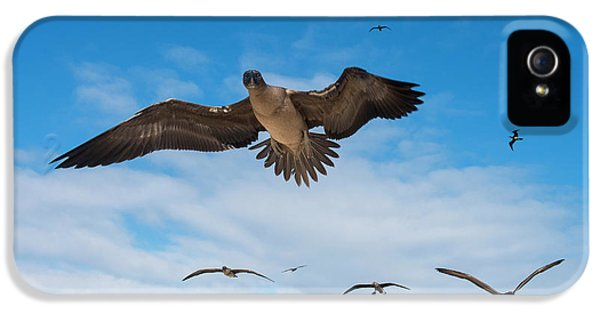 Red-footed Booby (sula Sula Websteri IPhone 5 Case