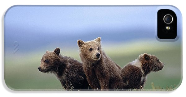 4 Young Brown Bear Cubs Huddled IPhone 5 / 5s Case by Eberhard Brunner