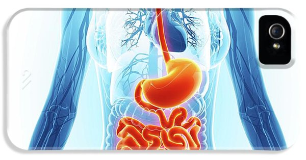 Human Digestive System IPhone 5 Case