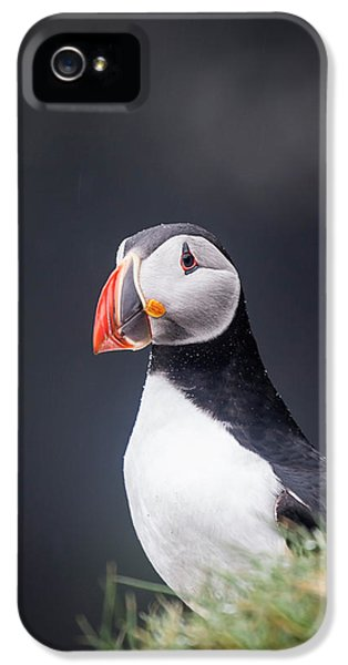 Puffin iPhone 5 Case - Atlantic Puffin Fratercula Arctica by Panoramic Images