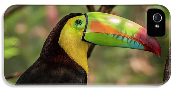 Toucan iPhone 5 Case - Central America, Honduras, Roatan by Jim Engelbrecht