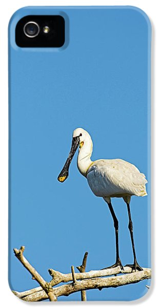 Eurasian Spoonbill Or Common Spoonbill IPhone 5 Case