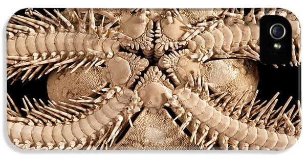 Green Brittle Starfish IPhone 5 Case