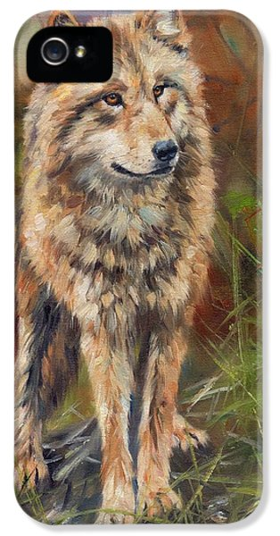 Grey Wolf IPhone 5 Case by David Stribbling