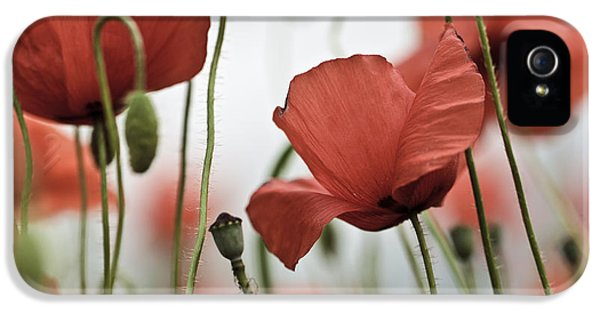 Red Poppy Flowers IPhone 5 Case