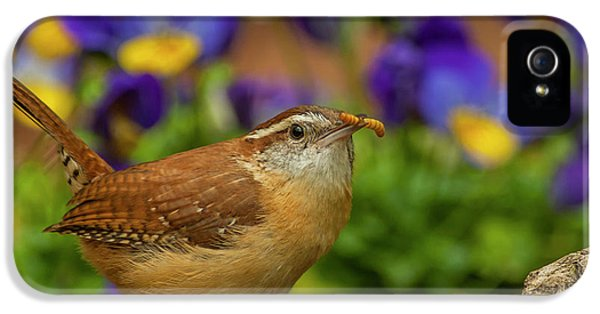 Wren iPhone 5 Case - Usa, North Carolina, Guilford County by Jaynes Gallery