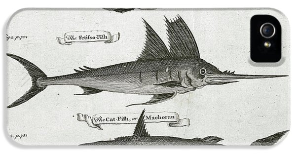 Catfish iPhone 5 Case - Fish by British Library