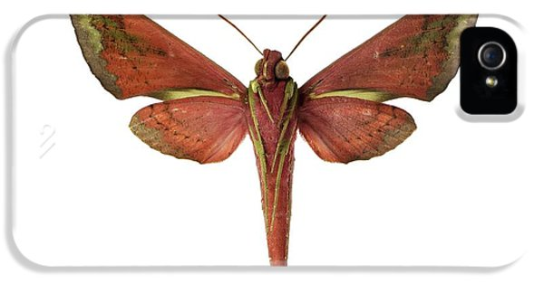 Hawk Moth IPhone 5 Case by F. Martinez Clavel