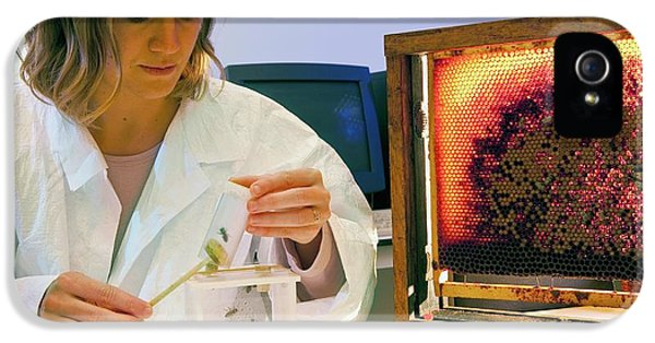 Honey Bee Pesticide Research IPhone 5 Case by Philippe Psaila