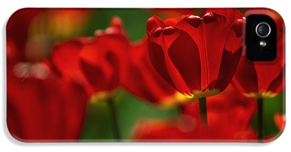 Red And Yellow Tulips IPhone 5 Case by Nailia Schwarz