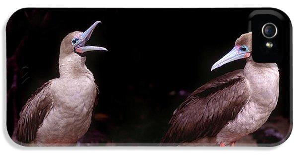 South America, Ecuador, Galapagos IPhone 5 Case