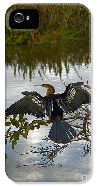 Anhinga IPhone 5 Case by Mark Newman