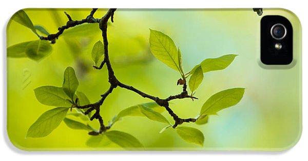 Spring Green IPhone 5 Case by Nailia Schwarz
