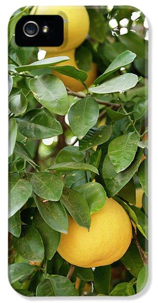 Grapefruit iPhone 5 Case - Tucson, Arizona, United States by Julien Mcroberts