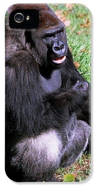 Silverback Western Lowland Gorilla IPhone 5 Case