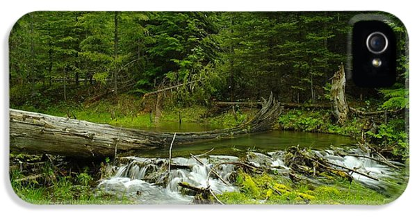A Beaver Dam Overflowing IPhone 5 Case by Jeff Swan