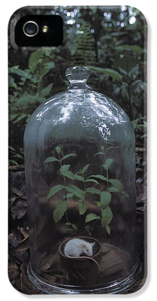 Breathe iPhone 5 Case - A Bell Jar With A Mint Plant by Peter Essick