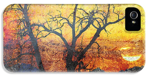 A Brilliant Observer Of Life IPhone 5 Case by Brett Pfister