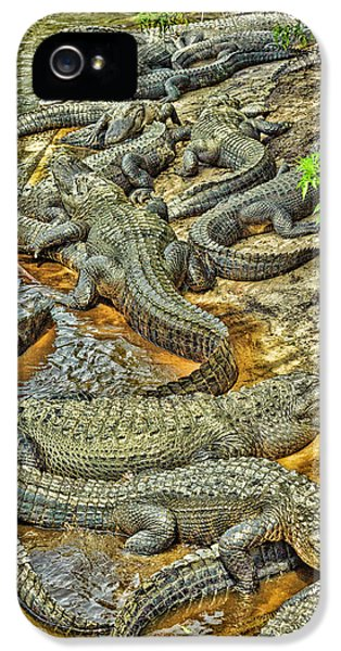 A Congregation Of Alligators IPhone 5 / 5s Case by Rona Schwarz