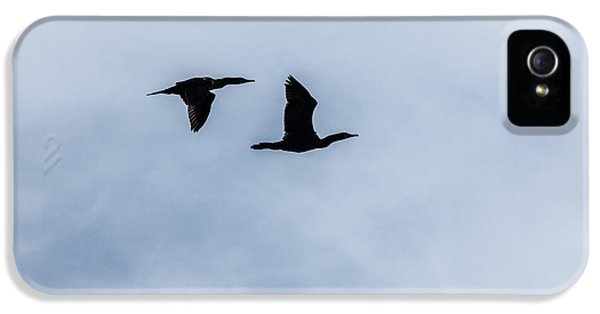 A Couple Of Cormorants IPhone 5 Case by Karol Livote