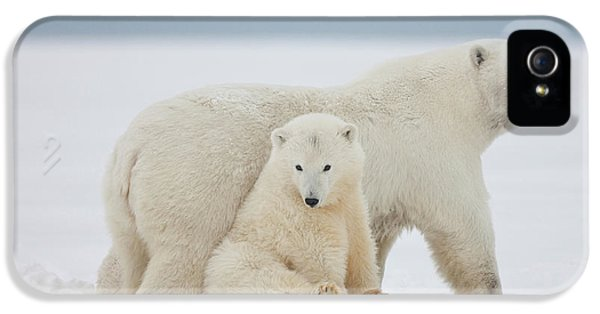 A Female Polar Bear And Her Two Cubs IPhone 5 Case by Hugh Rose