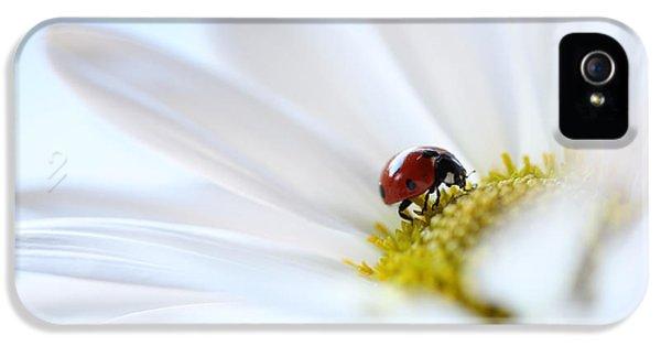 Ladybug iPhone 5 Case - A Fine Lady by Aaron Aldrich