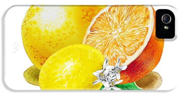 Grapefruit iPhone 5 Case - A Happy Citrus Bunch Grapefruit Lemon Orange by Irina Sztukowski