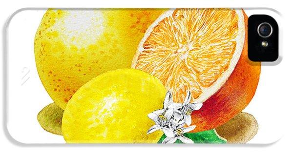 IPhone 5 Case featuring the painting A Happy Citrus Bunch Grapefruit Lemon Orange by Irina Sztukowski