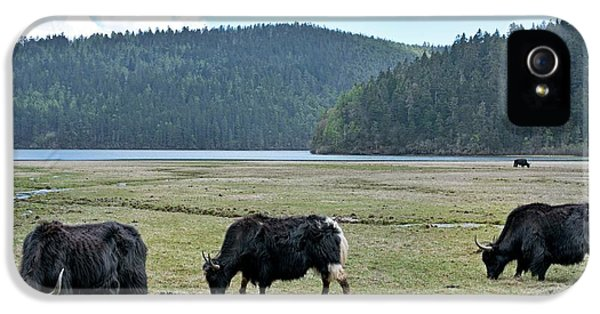 A Herd Of Yaks In Potatso National Park IPhone 5 Case by Tony Camacho