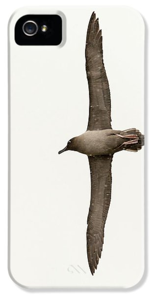 A Light Mantled Albatross IPhone 5 Case by Ashley Cooper