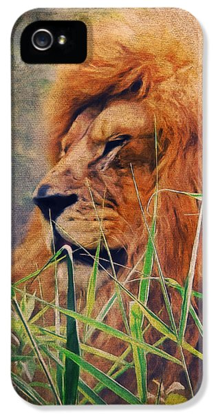 A Lion Portrait IPhone 5 Case by Angela Doelling AD DESIGN Photo and PhotoArt