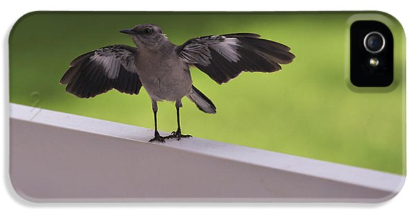 A Little Visitor Northern Mockingbird IPhone 5 Case by Terry DeLuco