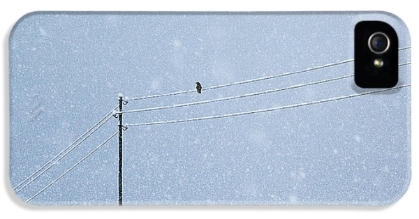 Crow iPhone 5 Case - A Long Day In Winter by Uschi Hermann