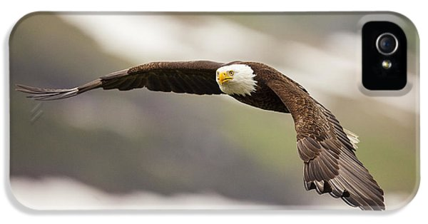 Condor iPhone 5 Case - A Mature Bald Eagle In Flight by Tim Grams