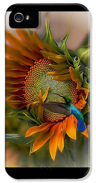 Sunflower iPhone 5 Case - A Moment In Time by John  Kolenberg
