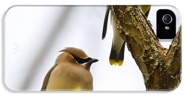 IPhone 5 Case featuring the photograph A Pair Of Cedar Waxwings by Ricky L Jones