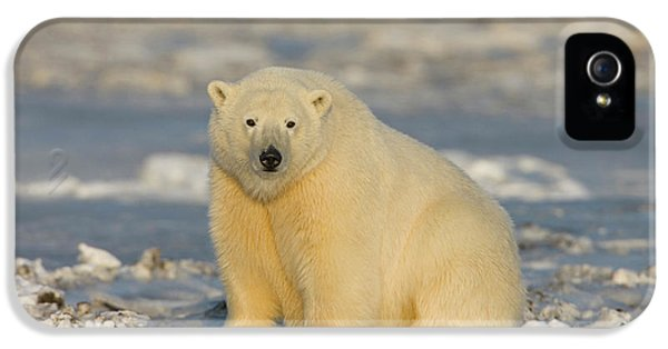 A Polar Bear Sits On The Frozen Surface IPhone 5 Case by Hugh Rose