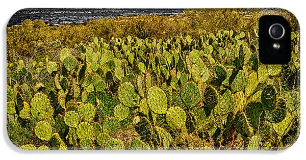 IPhone 5 Case featuring the photograph A Prickly Pear View by Mark Myhaver