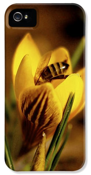 A Sign Of Spring IPhone 5 Case by Rona Black