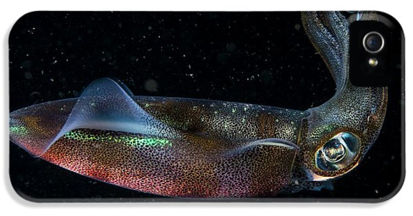 A Squid Swimming At Night IPhone 5 Case by Scubazoo