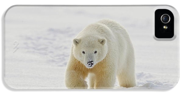 A Yearling Polar Bear Cub Plays IPhone 5 Case by Hugh Rose