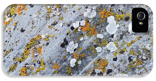 Abstract Orange Lichen 2 IPhone 5 Case by Chase Taylor