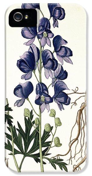 Aconitum Napellus IPhone 5 Case