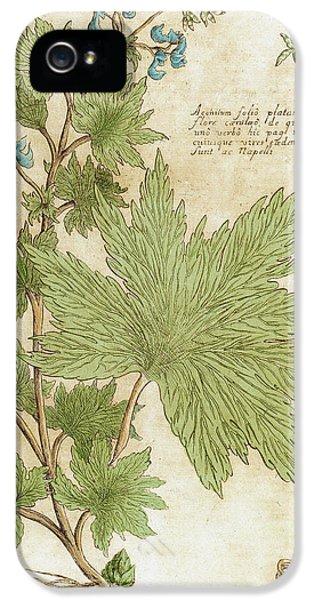 Aconitum Seventeenth-century Engraving IPhone 5 Case