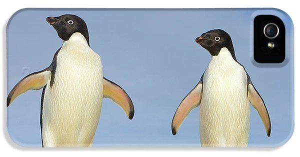 Adelie Penguin Duo IPhone 5 Case by Yva Momatiuk John Eastcott