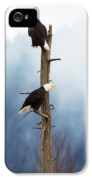Adult Bald Eagles  Haliaeetus IPhone 5 Case by Doug Lindstrand