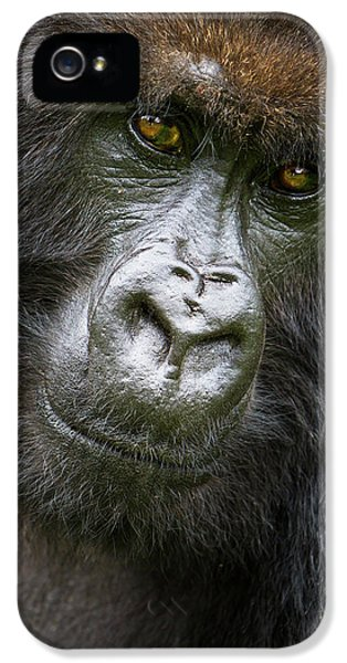 Africa Rwanda Female Mountain Gorilla IPhone 5 Case by Ralph H. Bendjebar