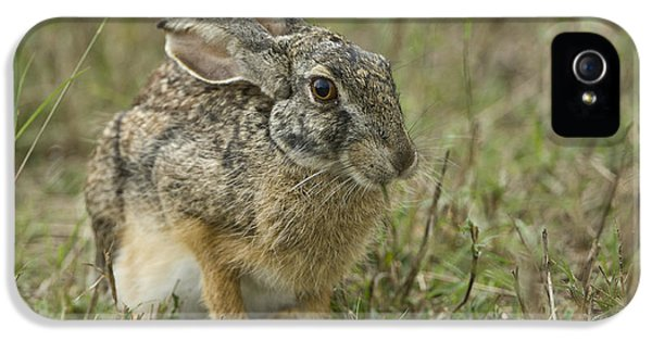 African Hare IPhone 5 Case